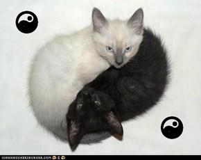 yin-yang or ceiling-basement; you decide