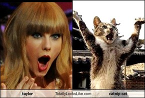 taylor Totally Looks Like catnip cat
