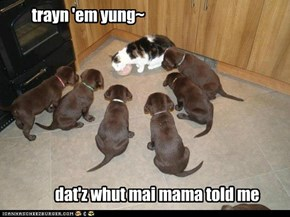 trayn 'em yung~