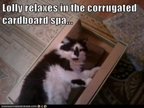 Lolly relaxes in the corrugated cardboard spa...