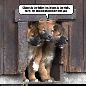 One in Three Puppies Loves Classic Rock