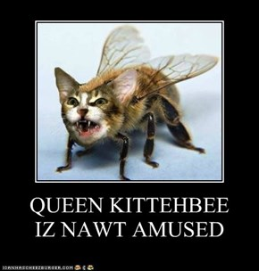 QUEEN KITTEHBEE IZ NAWT AMUSED
