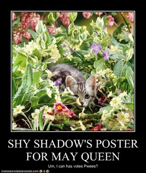 SHY SHADOW'S POSTER FOR MAY QUEEN