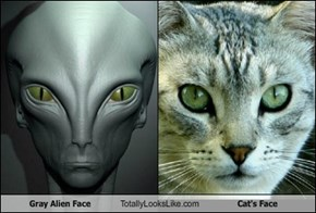 Gray Alien Face Totally Looks Like Cat's Face
