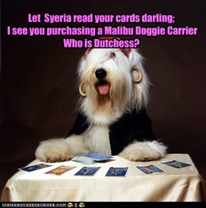 Let  Syeria read your cards darling;  I see you purchasing a Malibu Doggie Carrier  Who is Dutchess?