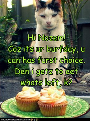 Hi Nozem! Coz its ur burfday, u can has furst choice. Den i getz to eet whats left, k?