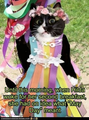 "Until this morning, when Hilda woke for her second breakfast, she had on idea what ""May Day"" meant"