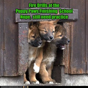 Fire Drills at the  Puppy Paws Finishing  School