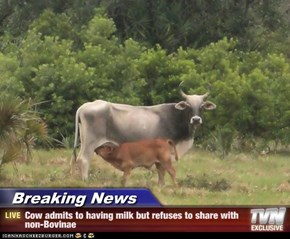 Breaking News - Cow admits to having milk but refuses to share with non-Bovinae
