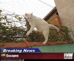Breaking News - Escapee