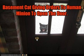 Basement Cat Giving Orders To Human Minion To Open The Door.