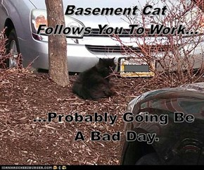 OMG... Basement Cat Followed Me to Work!