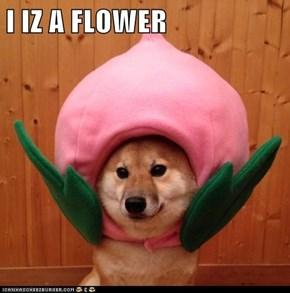 I IZ A FLOWER