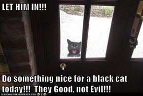 LET HIM IN!!!  Do something nice for a black cat today!!!  They Good, not Evil!!!