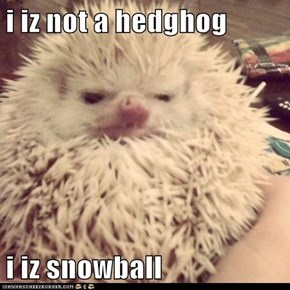 i iz not a hedghog   i iz snowball