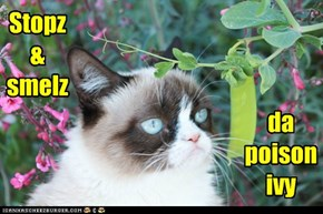 Stopz & smellz da poison ivy