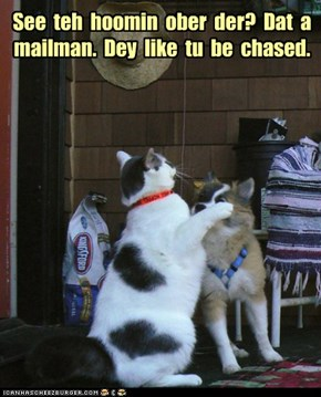 See  teh  hoomin  ober  der?  Dat  a mailman.  Dey  like  tu  be  chased.