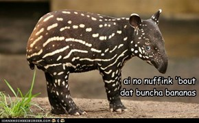 Trying to tapir off.