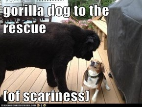 gorilla dog to the rescue  (of scariness)