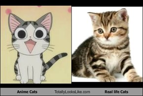 Anime Cats Totally Looks Like Real life Cats