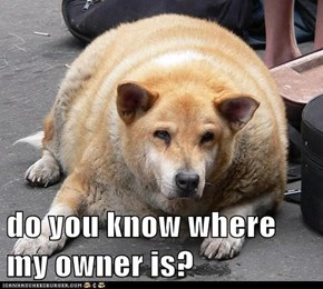 do you know where my owner is?