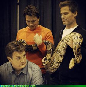Snakes? I hate snakes.