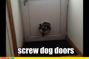 Doggy doors?