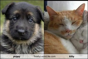 puppy Totally Looks Like kitty