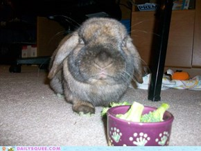 This rabbit definitely disapproves.