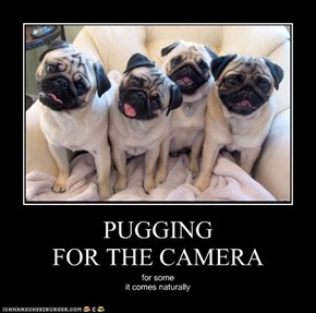 PUGGING FOR THE CAMERA