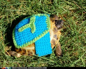 Super Tortoise to the Rescue!