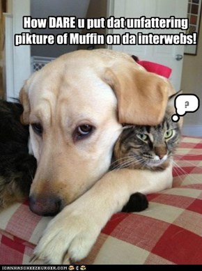 How DARE u put dat unfattering pikture of Muffin on da interwebs!