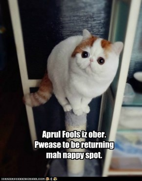 Pranked kitteh nawt happy.