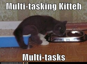 Multi-tasking Kitteh  Multi-tasks