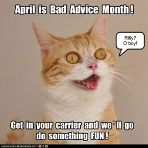 Bad Advice for Kittehs