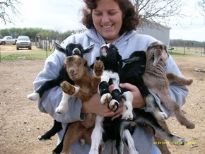 I Want to Hug all the Goats