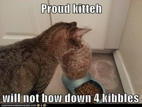 Proud kitteh  will not bow down 4 kibbles