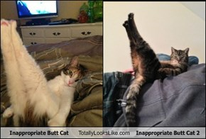 Inappropriate Butt Cat Totally Looks Like Inappropriate Butt Cat 2