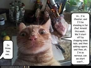 Chef's Cat