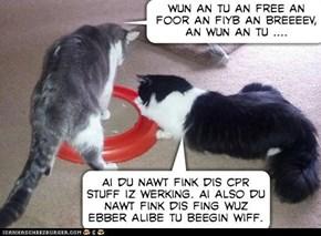 why cats do not make good paramedics