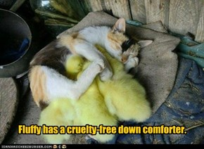 Fluffy Has a Cruelty-Free Down Comforter