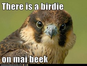 There is a birdie  on mai beek