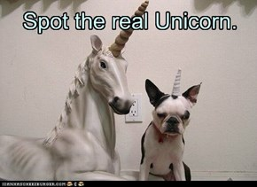 Spot the real Unicorn.