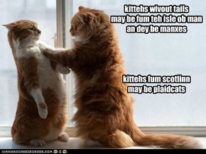 kittehs wivout tails may be fum teh isle ob man an dey be manxes     kittehs fum scotlinn may be plaidcats