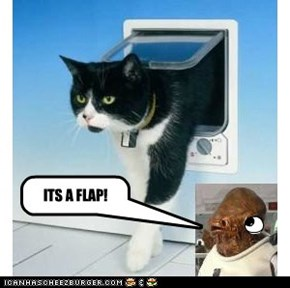 its a flap!