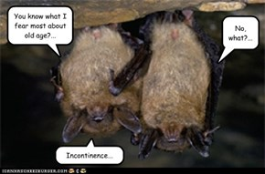 Two Brown Bats