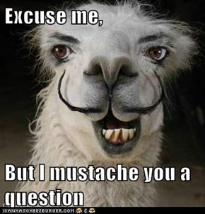 Excuse me,  But I mustache you a question