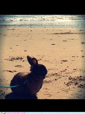 Bunny's Day Out to the Beach