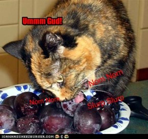 Hey Ma, the cat has gone plum crazy!!