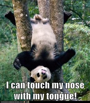 Talented Panda